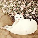 Ir Mar profile image