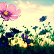 lilacflower