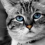 James Rockefeller profile image